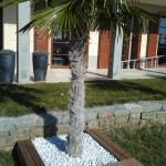 Lesena terasa, palma - Portorož